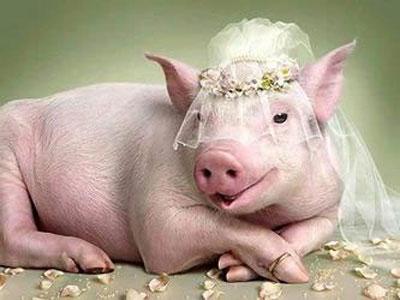 Giấc mơ thấy lợn đáng con gì chắc ăn nhất