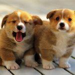 Cùng chúng tôi giải mã giấc mơ về chó và ý nghĩa về nó hôm nay