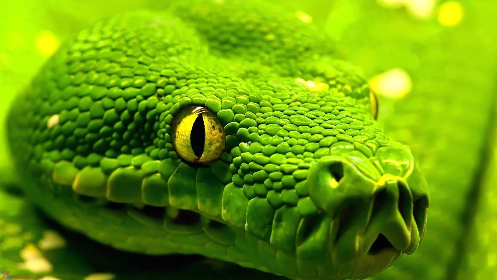 nằm mơ thấy rắn đánh con gì