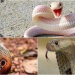 Nên đánh con số đề nào khi nằm mơ thấy rắn cắn