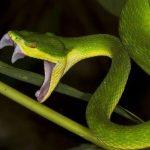 Mơ thấy rắn cắn điềm  lành hay giữ