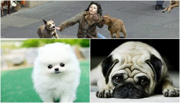 Nằm mơ thấy chó đuổi đánh đề con gì chắc ăn nhất ý nghĩa gì?