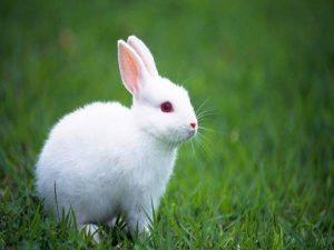 Ý nghĩa của giấc mơ thấy thỏ và con số may mắn
