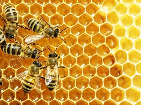 Nằm mơ thấy mật ong là điềm gì, đánh con lô đề nào dễ trúng?