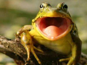 Mơ thấy ếch là điềm gì? Con số vàng ẩn chứa là số mấy?